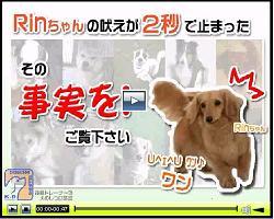 dogshituke.JPG